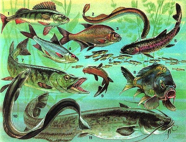 Biologie : Su00fcsswasserfische : 02e : lernen u0026 u00fcben : Online ...